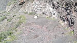 19_venčení na skalách